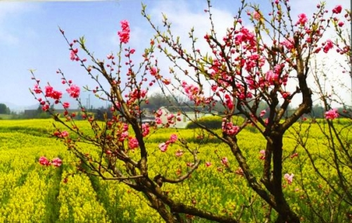烟花三月 到江南寻觅最清甜的春色
