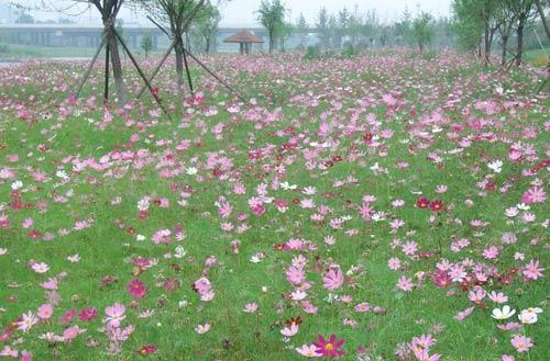 永定河畔万紫千红 游人踏青笑迎春风
