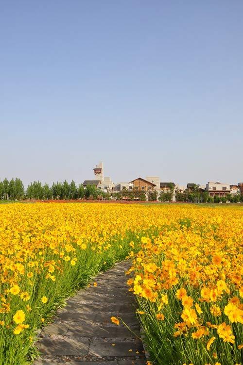 绽放在羌族新城绚丽的花朵