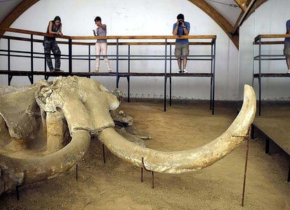 Vika is a 6-meter-long adult mammoth. Archaeologists spent a month planning how to transport the fossil from the site of its discovery, and they had to be very careful.