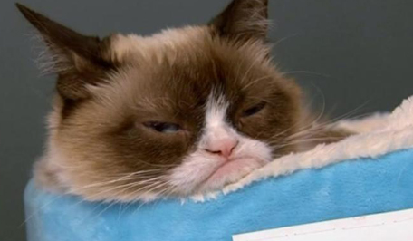 Grumpy Cat has come to New York and endured her smiling fans. More than a thousand people gathered at a bookstore in Manhattan on Thursday for their chance to meet the cuddly creature.