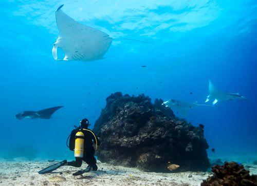 南大堡礁:巨型海洋生物的家园
