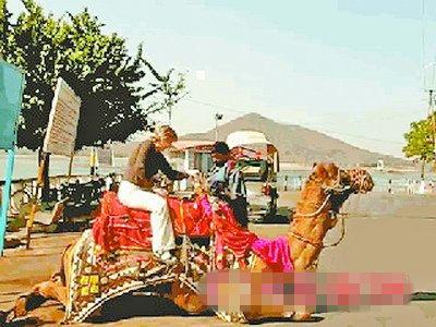 骆驼的画法步骤
