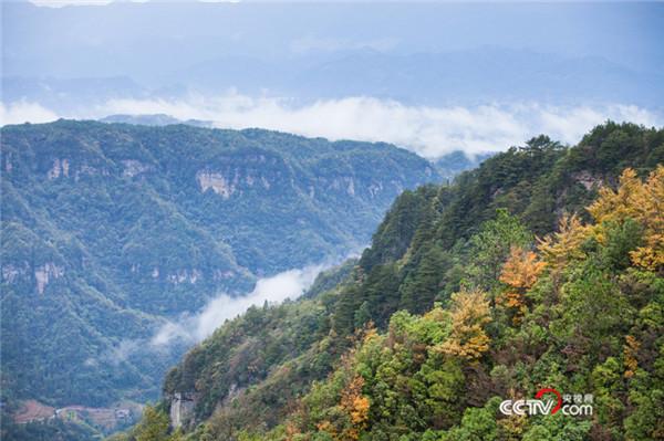 黄水国家森林公园火棘旅游季启动 打造秋冬旅游产品