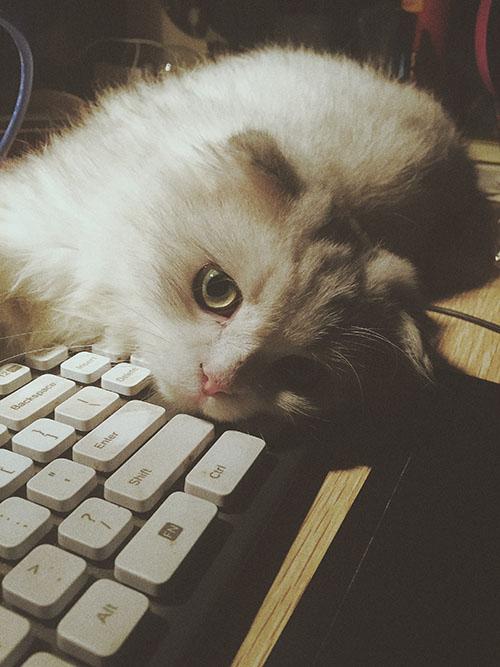 壁纸 动物 猫 猫咪 小猫 桌面 500_667 竖版 竖屏 手机