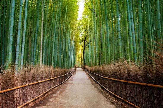 穿越世界上最美的树隧道 美到忘记呼吸