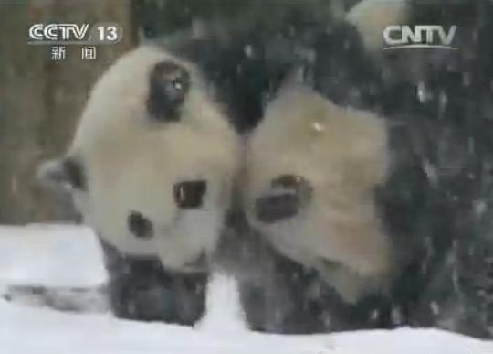 熊猫打滚简笔画