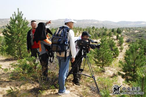 《大漠长河》摄制组拍摄沙漠绿植