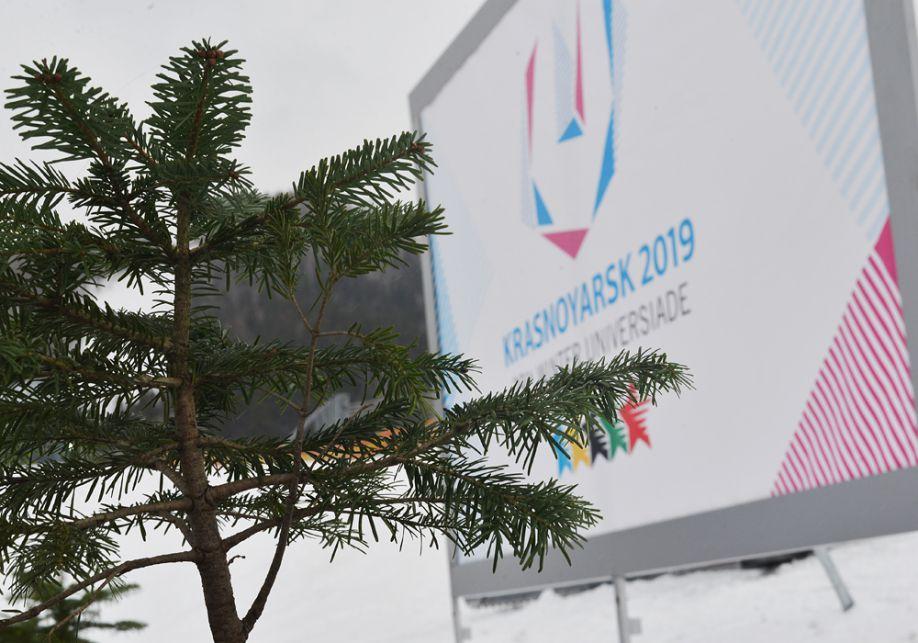 В Красноярске, который будет принимать Универсиаду-2019, высадили 5 пихт, привезенных из Сочи