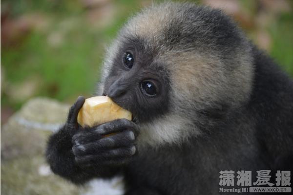 """长沙生态动物园举行""""动物明星""""评选活动"""