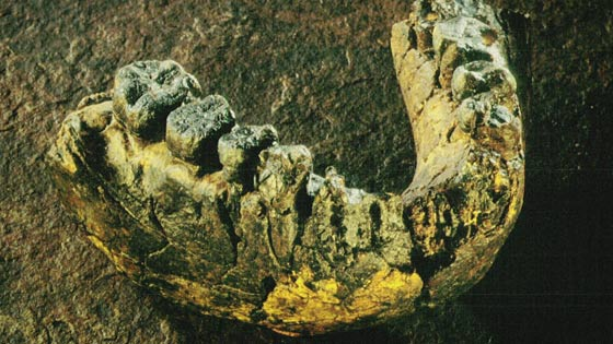 A two and a half million old hominid jaw bone found in the country.
