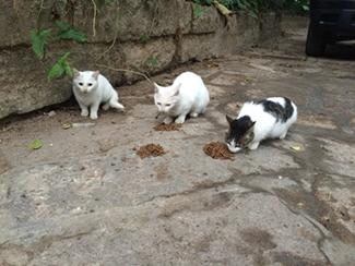 植物园一群在吃猫粮的猫咪。
