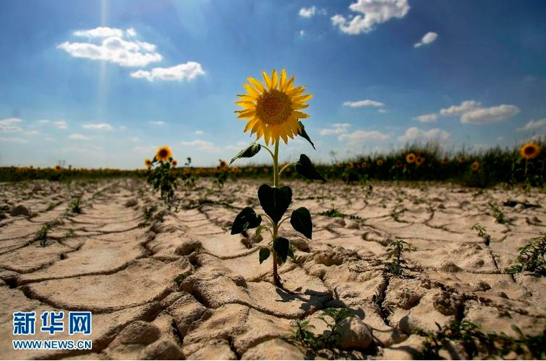 China's ongoing fight to combat desertification and drought - CCTV ...