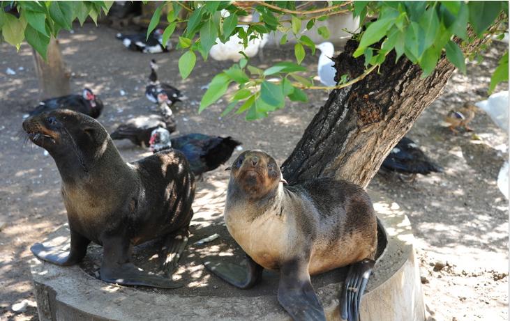 В читинской зоопарк привезли двух морских котиков