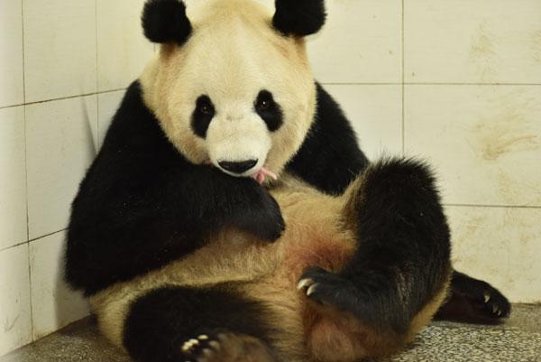 """大熊猫""""瑛华""""与幼仔(李伟摄)"""