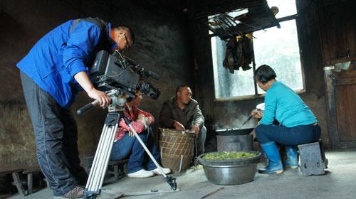 虫茶的制作极为特殊,首先制作原料不是普通的茶叶,而是一种叫三叶海棠图片