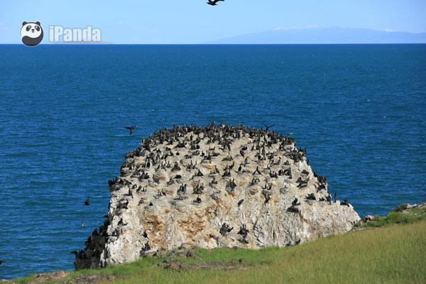 青海湖鸟岛的美丽景色 季熠非 摄