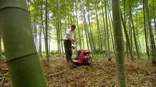 竹子微信头像风景图片