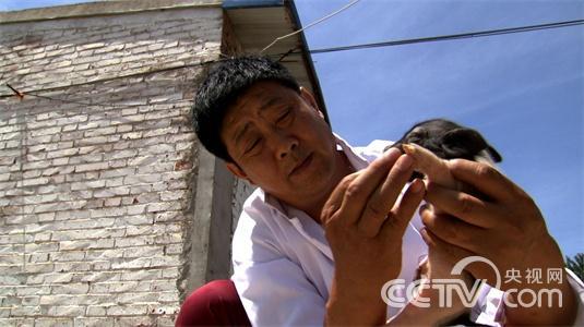 澳门新葡京线上网址致富经]非要在天津养湖南土猪的人(20150717