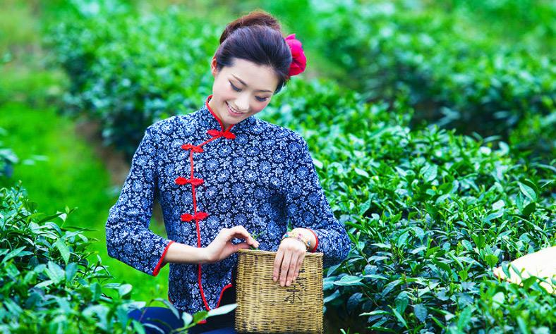 """Архив: Строительство """"пояса и пути"""" открывает новые возможности перед чаеводами провинции Фуцзянь"""