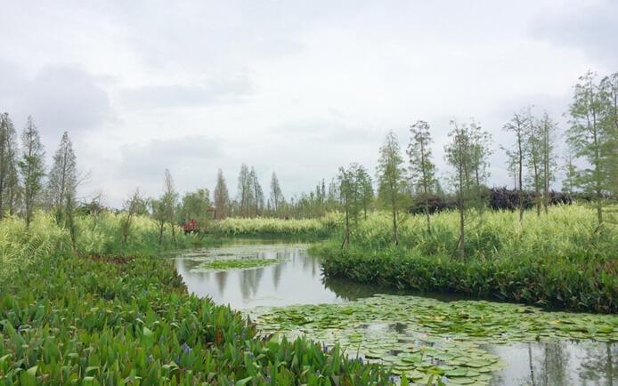 海东地区实施森林生态效益补偿的调查和思考