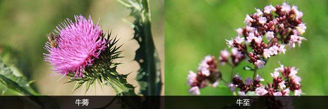 植物微信头像成熟稳重