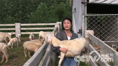 流言缠身的女孩回村养羊