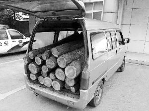 两男子演现实版光头强夜里盗树 搬千斤重木头下山