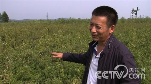 [致富经]野生蓝莓引发的传奇财富