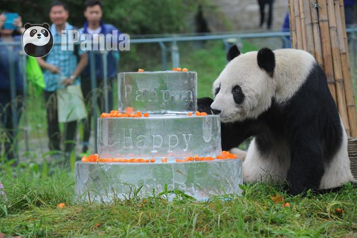 盼盼吃生日蛋糕