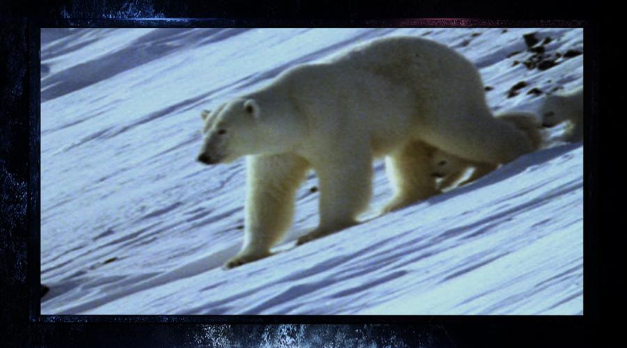 自然传奇 十一 特别节目 终极动物倒计时 9月30 10月4日