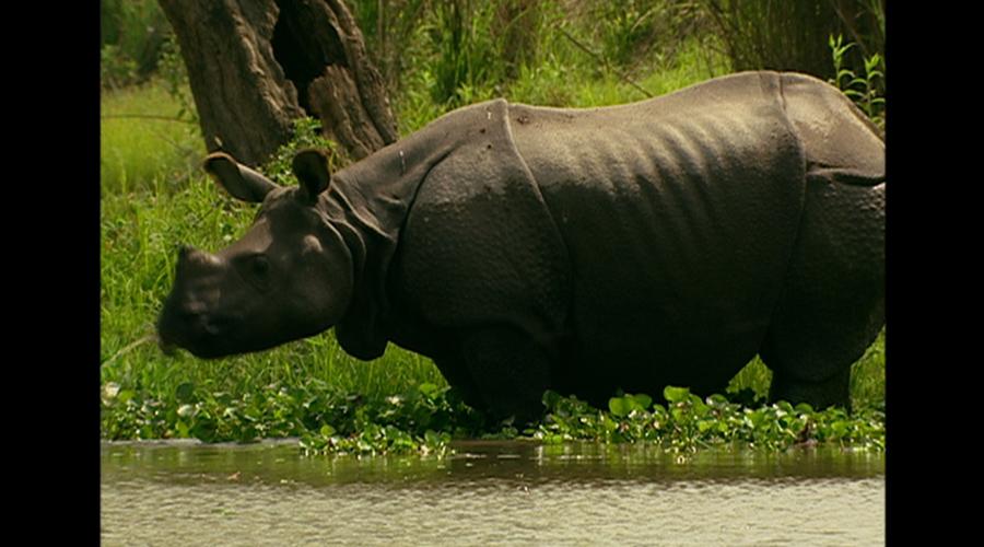 它们的数量已经多达一万两千只,它们是第一种从濒危动物名单中被除名