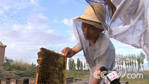 蜜蜂凶猛 财富甜蜜
