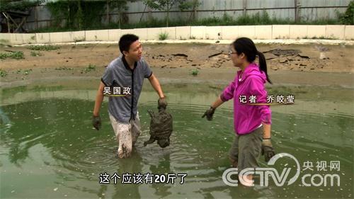 [致富经]海归养龟不走寻常路