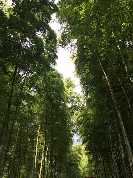 壁纸 风景 森林 植物 桌面 450_600 竖版 竖屏 手机