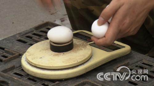 [致富经]25岁小伙靠不吃的鸡蛋发财