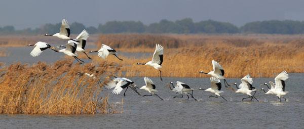 动物的迁徙:  2006-12-15