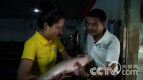 [致富经]睡觉的鱼好赚钱
