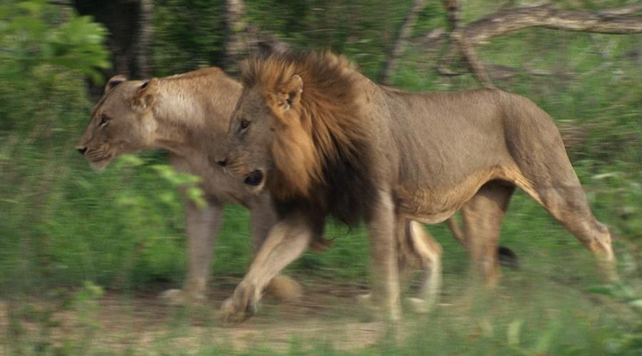 地球上最致命的猎食者栖息于此
