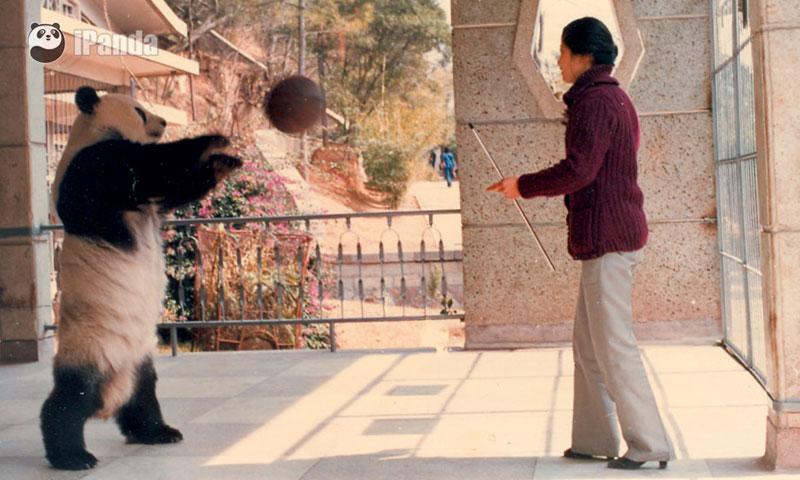 """""""巴斯""""和饲养员 图片由海峡(福州)熊猫世界提供"""