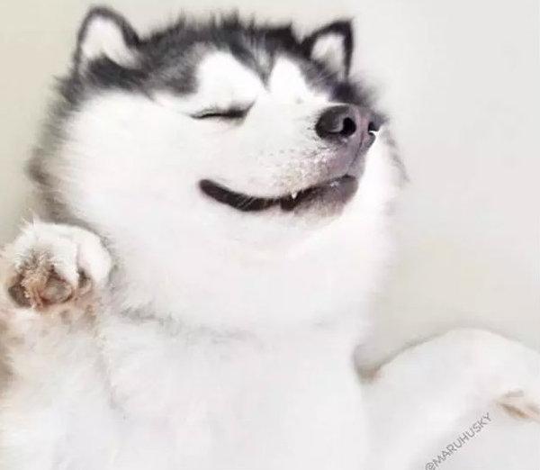 动物大笑qq图片