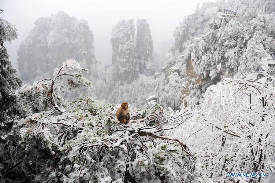 Bilan 2015/EN IMAGES: La beauté de la nature