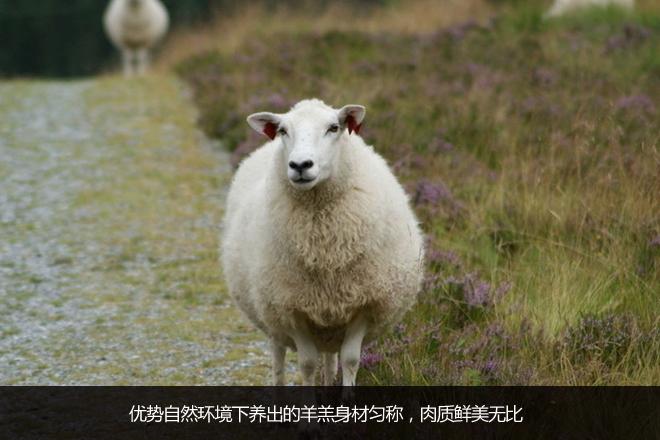 动物羊唯美意境图片