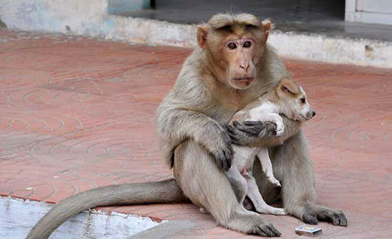 This puppy was rescued by a monkey