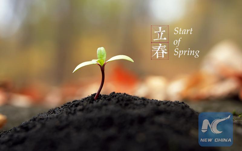 Des semis verts sortent du sol. (Photo éditée par Xinhua/Zhang Hui)