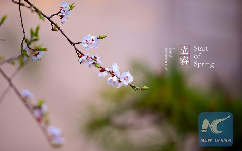 Une branche de fleurs. (Photo éditée par Xinhua/Zhang Hui)