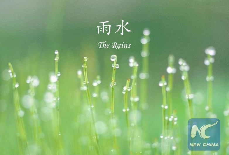 Gouttes de pluie sur des pousses naissantes. (Photo éditée par Xinhua/Zhang Hui)