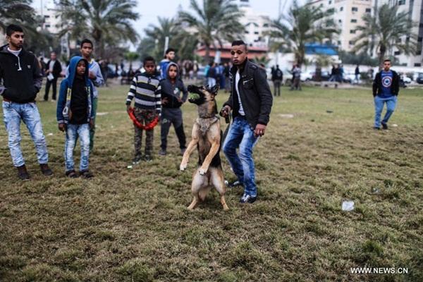 اقيم أول مهرجان لاستعراض جمال وقدرات الكلاب في غزة