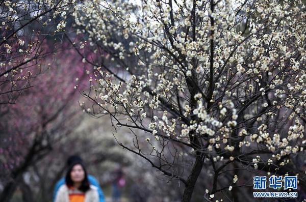 Floraisons hâtives : Les meilleurs moments pour admirer les fleurs printanières