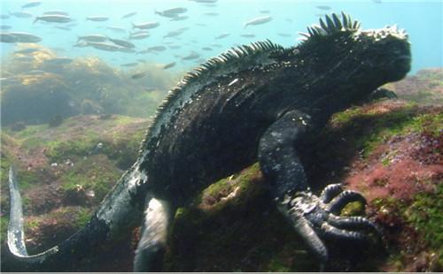 深海动物疯狂猜图